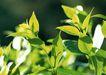 新绿叶0150,新绿叶,植物,