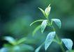 新绿叶0154,新绿叶,植物,