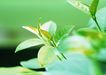 新绿叶0155,新绿叶,植物,