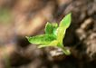 新绿叶0164,新绿叶,植物,