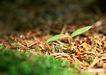 新绿叶0165,新绿叶,植物,