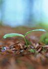 新绿叶0166,新绿叶,植物,