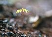 新绿叶0174,新绿叶,植物,酸枣 垃圾 精神