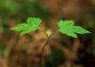 新绿叶0175,新绿叶,植物,开放 大树 山林