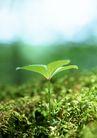 新绿叶0178,新绿叶,植物,钻出 生命 旺盛