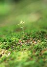 新绿叶0180,新绿叶,植物,泥土 潮湿 小草