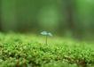 新绿叶0181,新绿叶,植物,植物 幼苗