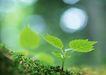 新绿叶0182,新绿叶,植物,嫩叶 新生物