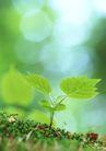 新绿叶0183,新绿叶,植物,土壤 新叶