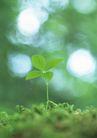 新绿叶0184,新绿叶,植物,绿叶 嫩芽