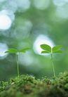 新绿叶0185,新绿叶,植物,嫩叶