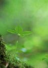 新绿叶0187,新绿叶,植物,植物