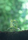 新绿叶0188,新绿叶,植物,黑土 土壤