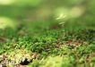 新绿叶0191,新绿叶,植物,