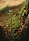 新绿叶0194,新绿叶,植物,