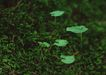 新绿叶0198,新绿叶,植物,