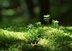 新绿叶0199,新绿叶,植物,