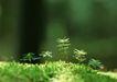新绿叶0200,新绿叶,植物,