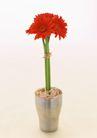 素雅鲜花0145,素雅鲜花,植物,