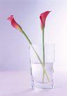 素雅鲜花0146,素雅鲜花,植物,