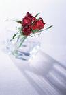 素雅鲜花0148,素雅鲜花,植物,