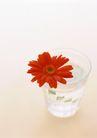 素雅鲜花0150,素雅鲜花,植物,