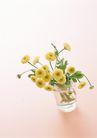 素雅鲜花0151,素雅鲜花,植物,