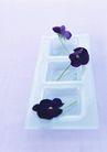素雅鲜花0156,素雅鲜花,植物,素雅的花