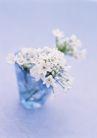 素雅鲜花0157,素雅鲜花,植物,白色小花