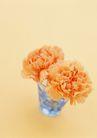 素雅鲜花0160,素雅鲜花,植物,两朵花