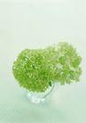 素雅鲜花0164,素雅鲜花,植物,绿色盆栽