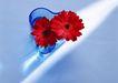 素雅鲜花0166,素雅鲜花,植物,红色雏菊