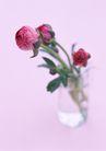 素雅鲜花0168,素雅鲜花,植物,花苞
