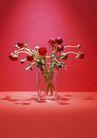 素雅鲜花0169,素雅鲜花,植物,一些花苞