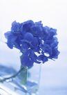 素雅鲜花0171,素雅鲜花,植物,鲜花 蓝色 花杯