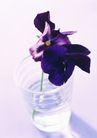 素雅鲜花0172,素雅鲜花,植物,清水 玻璃 透明