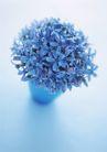 素雅鲜花0176,素雅鲜花,植物,小花 厕所 一把