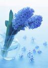 素雅鲜花0180,素雅鲜花,植物,叶子 调谢 残缺
