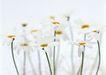 素雅鲜花0185,素雅鲜花,植物,植物