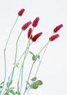 素雅鲜花0186,素雅鲜花,植物,鲜花