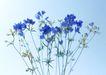 素雅鲜花0190,素雅鲜花,植物,紫色花朵