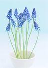 素雅鲜花0191,素雅鲜花,植物,