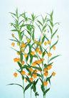 素雅鲜花0192,素雅鲜花,植物,