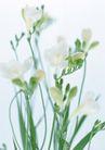 素雅鲜花0193,素雅鲜花,植物,