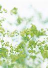 素雅鲜花0194,素雅鲜花,植物,