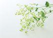 素雅鲜花0195,素雅鲜花,植物,
