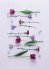 素雅鲜花0196,素雅鲜花,植物,