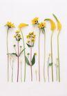 素雅鲜花0197,素雅鲜花,植物,