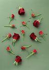 素雅鲜花0200,素雅鲜花,植物,