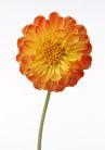 花卉造型0145,花卉造型,植物,
